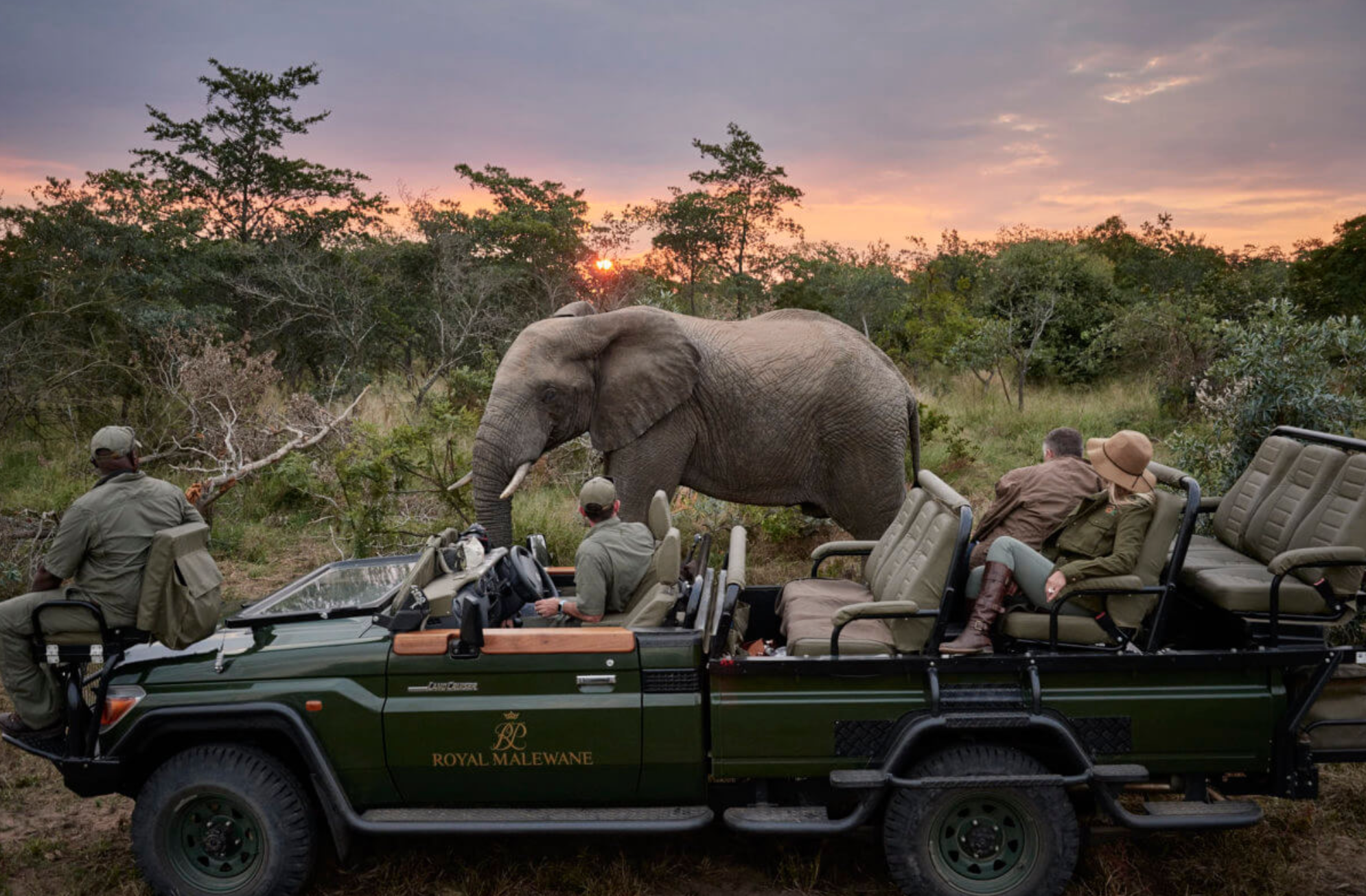 Up close and personal with the Big 5 at Royal Malewane, a leading luxury Kruger Park Safari Lodge by the Royal Portfolio