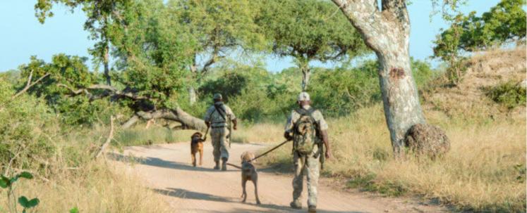 Counter Poaching