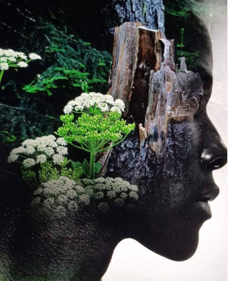 Jungle - Antonio Mora